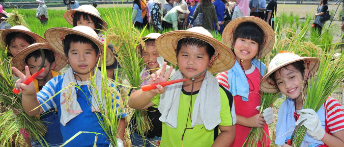 Elementary school students harvested rice